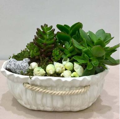 Picture of Small Arrangement with succulents 012