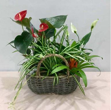 Picture of Plants Arrangement