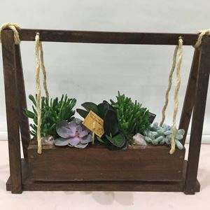 Picture of Succulents in wooden Swing