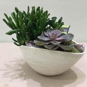 Picture of Succulent Arrangement