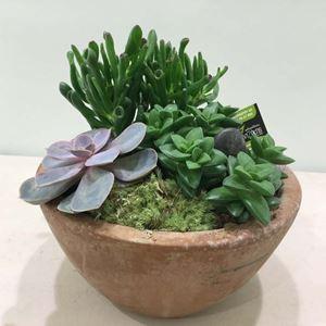 Picture of Succulents Arrangement