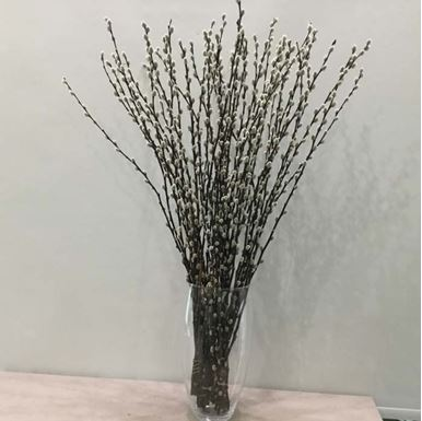 Picture of Salix Stems