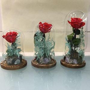 Εικόνα της Τριαντάφυλλο Forever Κόκκινο Μικρό