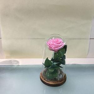 Εικόνα της Τριαντάφυλλο Forever Ροζ Μικρό