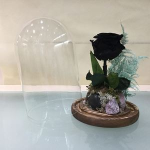 Εικόνα της Τριαντάφυλλο Forever Μαύρο Μικρό
