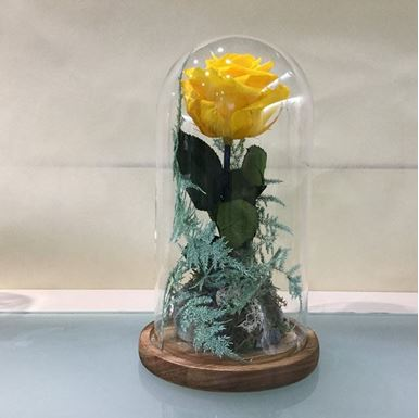 Picture of Forever Rose Yellow Small Size