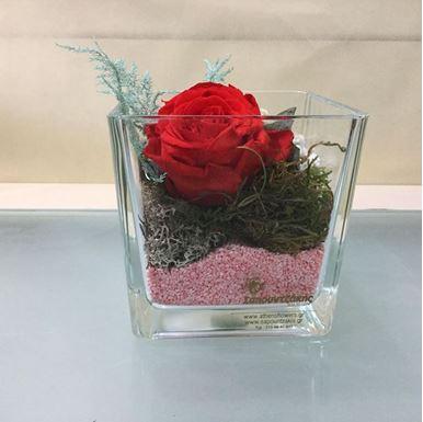 Τριαντάφυλλο Forever