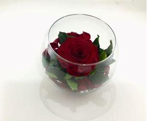 Εικόνα της Τριαντάφυλλο Forever