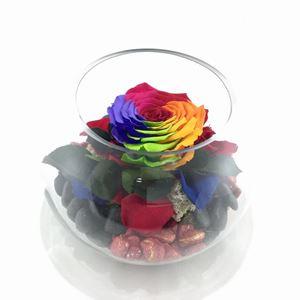Εικόνα της Τριαντάφυλλο Forever Rainbow