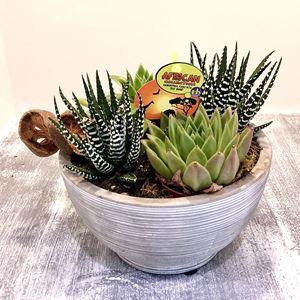 Picture of Succulent Arrangement 0037