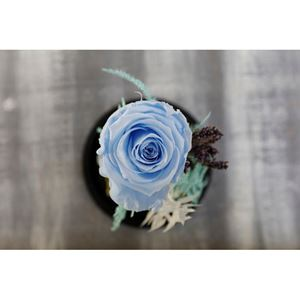 Picture of Forever Rose Blue Medium