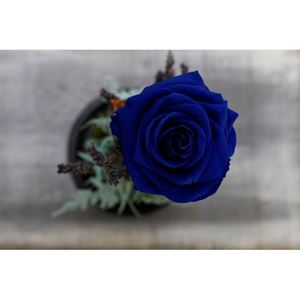 Picture of Forever Rose Blue Big Size