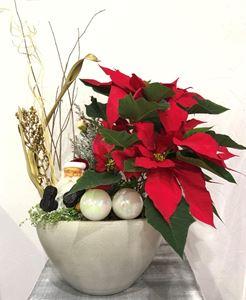 Εικόνα της Σύνθεση Φυτών Χριστουγέννων