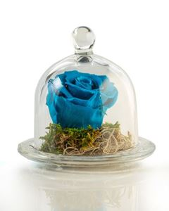 Picture of Forever Rose Blue Small