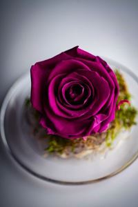 Picture of Forever Rose Purple Small