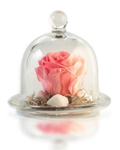 Picture of Forever Rose Pink Small