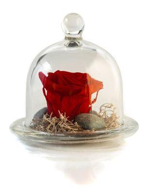 Forever Rose Κόκκινο Μικρό