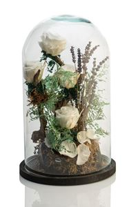 Picture of Forever Rose White Giant