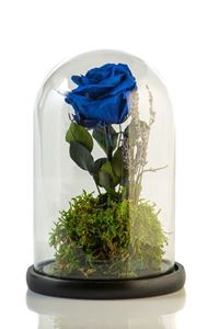 Picture of Beauty & The Beast Blue